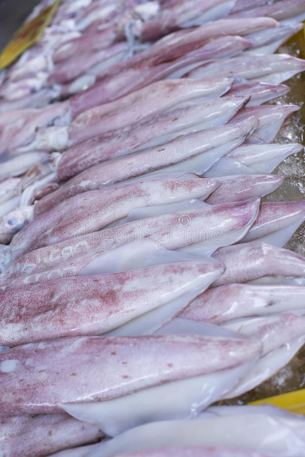 Thailand seafood. Squid seafood market in Thailand stock image