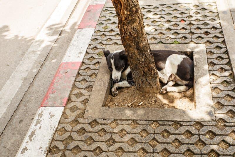Thailand-Straßenhund stockbilder