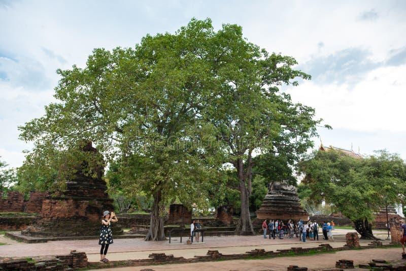 Thailand tempel - den gamla pagoden p? Wat Yai Chai Mongkhon, historiska Ayutthaya parkerar, Thailand royaltyfri bild