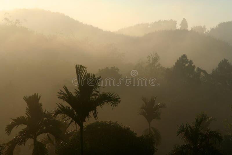 Thailands Dschungel stockbilder