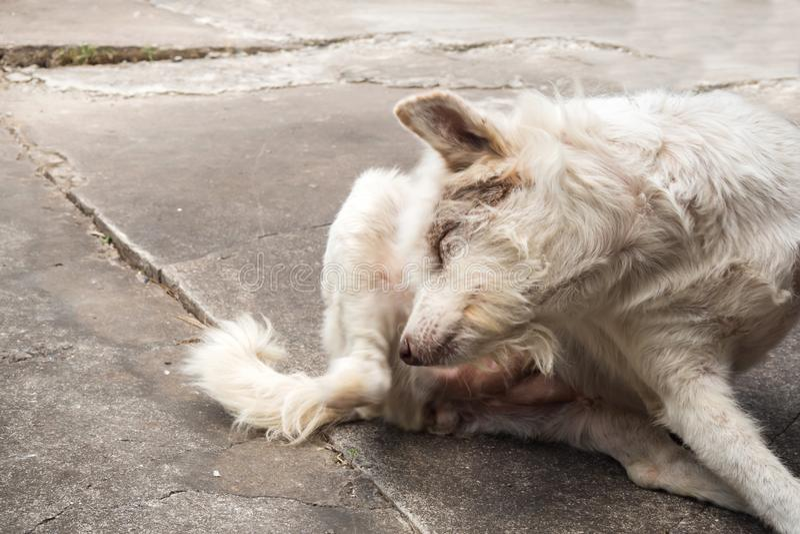Thais bastaard hond krassend hoofd stock afbeeldingen