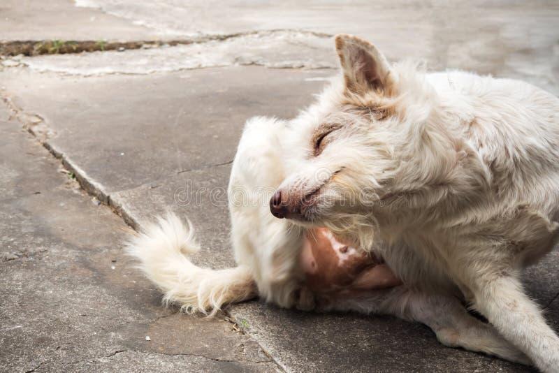 Thais bastaard hond krassend hoofd royalty-vrije stock afbeelding