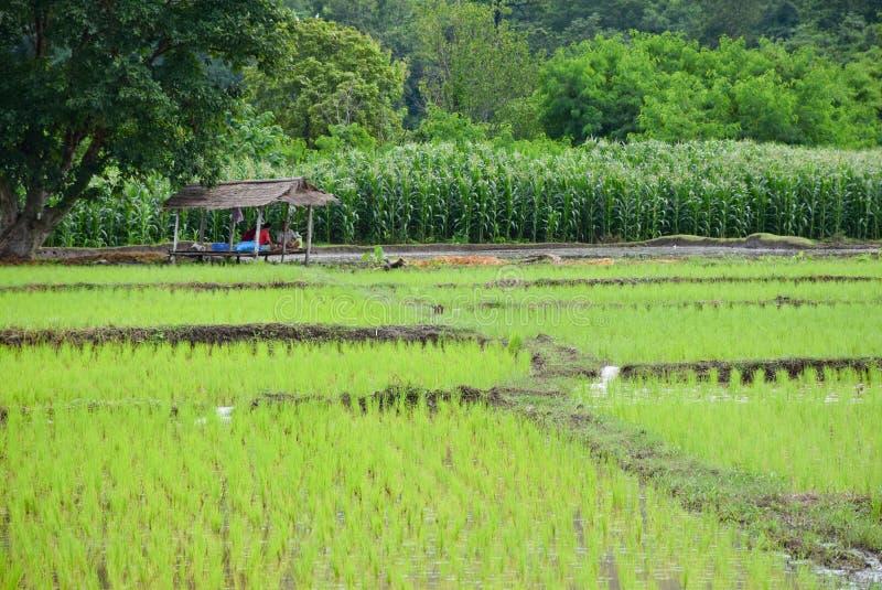 Thais farmmerverblijf in de hut stock foto's