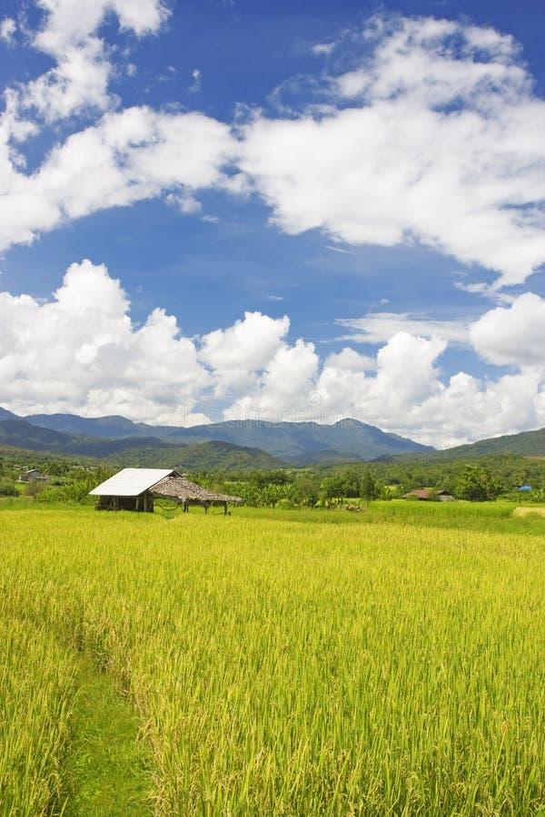 Thais padiegebied royalty-vrije stock foto