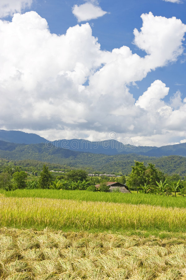 Thais padiegebied royalty-vrije stock fotografie