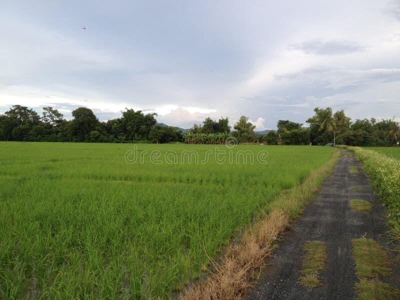 Thais platteland royalty-vrije stock foto's