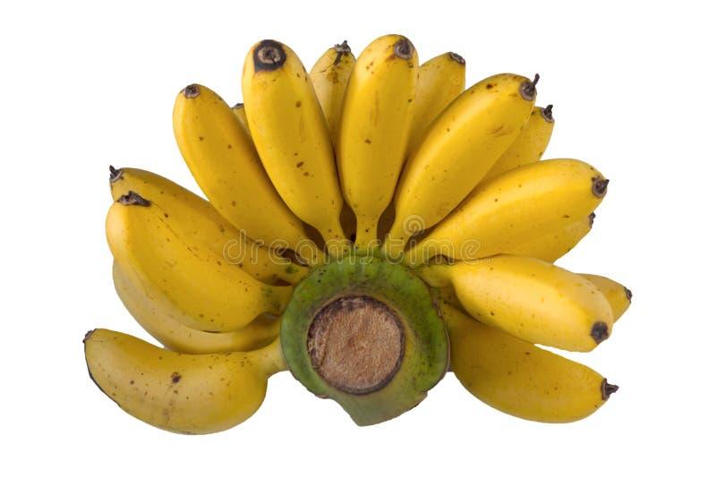 Thaise Bananen op de witte achtergrond royalty-vrije stock afbeelding