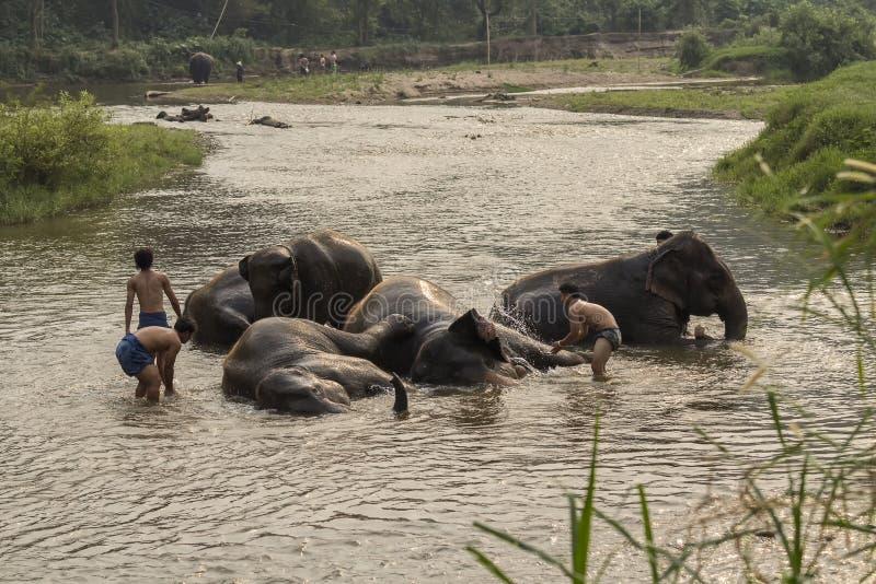 Thaise die olifanten een bad worden genomen door mahout bij rivier stock afbeeldingen