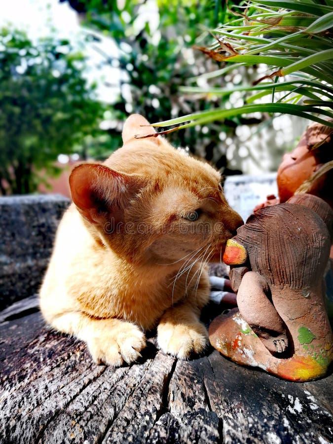 Thaise oranje kat stock afbeelding