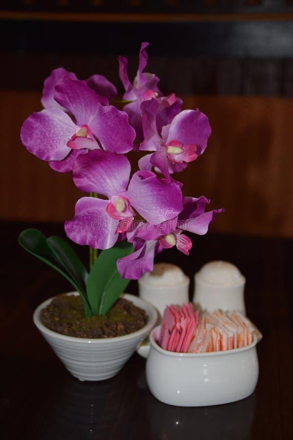 Thaise orchidee stock afbeeldingen