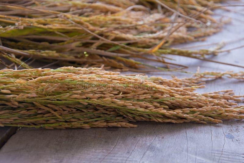 Thaise rijst royalty-vrije stock foto