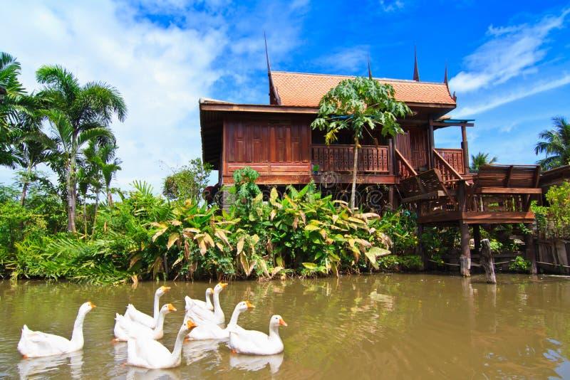 Thaise stijlhuis en zwaan royalty-vrije stock fotografie