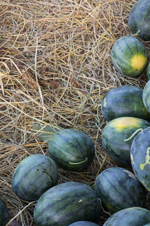 Thaise watermeloen royalty-vrije stock foto
