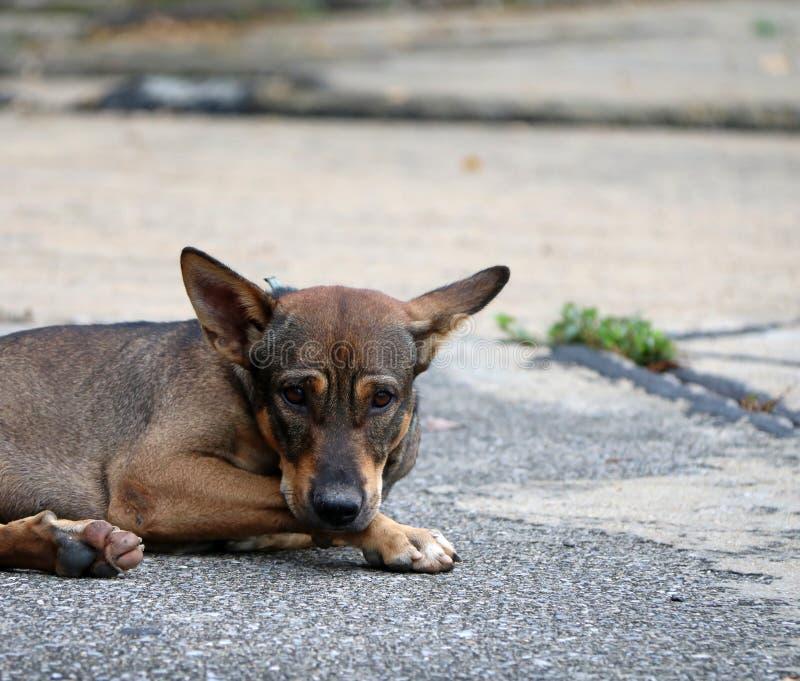 Thaise zwarte en bruine en witte kleur van verdwaalde hond die op de straat bepalen royalty-vrije stock fotografie