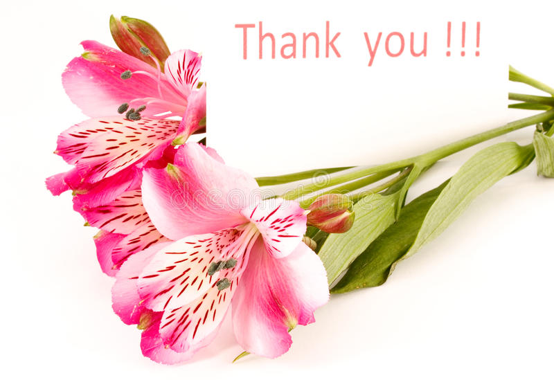 `Thank you` royalty free stock photo