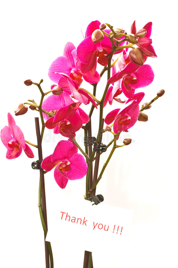 `Thank you` stock photos