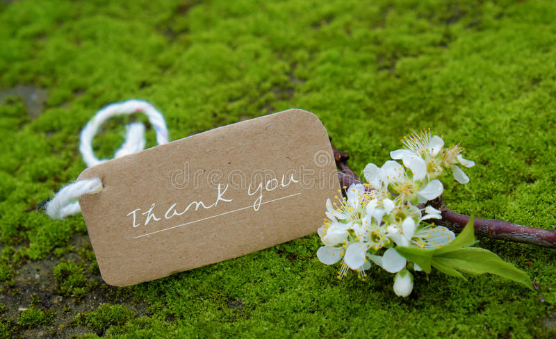 Thank you background, white flower royalty free stock photography