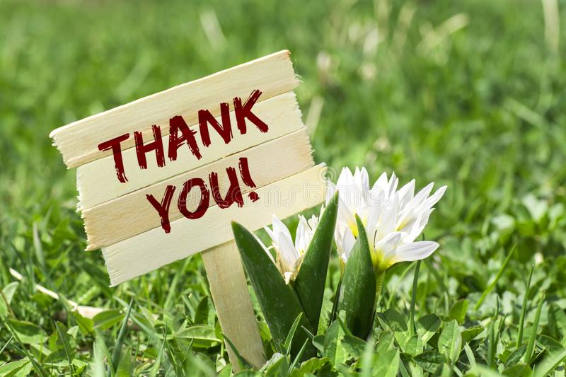 Thank you sign. Thank you on wooden sign in garden with spring flower stock photography