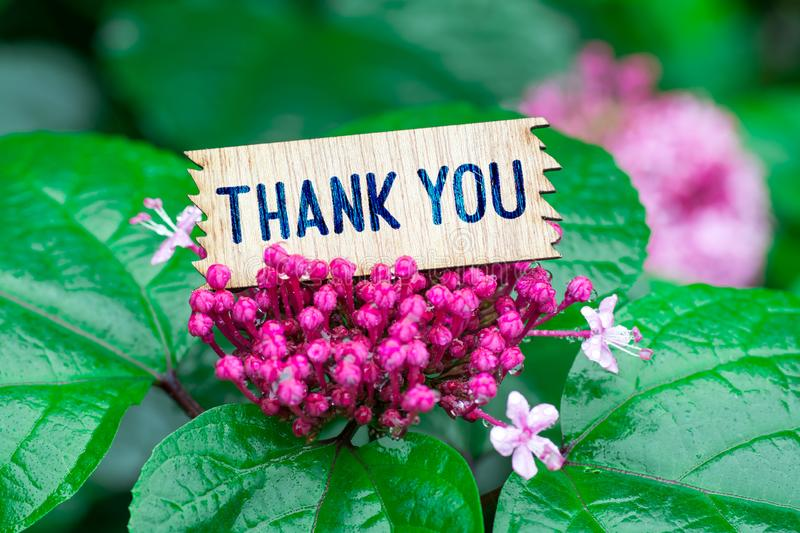 Thank you in wooden card stock images