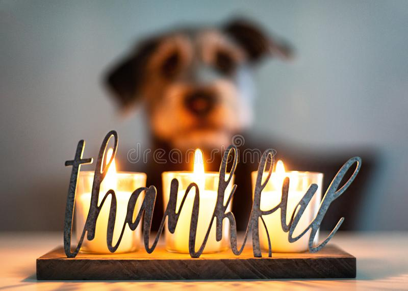Thankful Gratitude Candles With Dog in Background. Thankful gratitude lit candles glowing with face of dog in blurred background stock photography