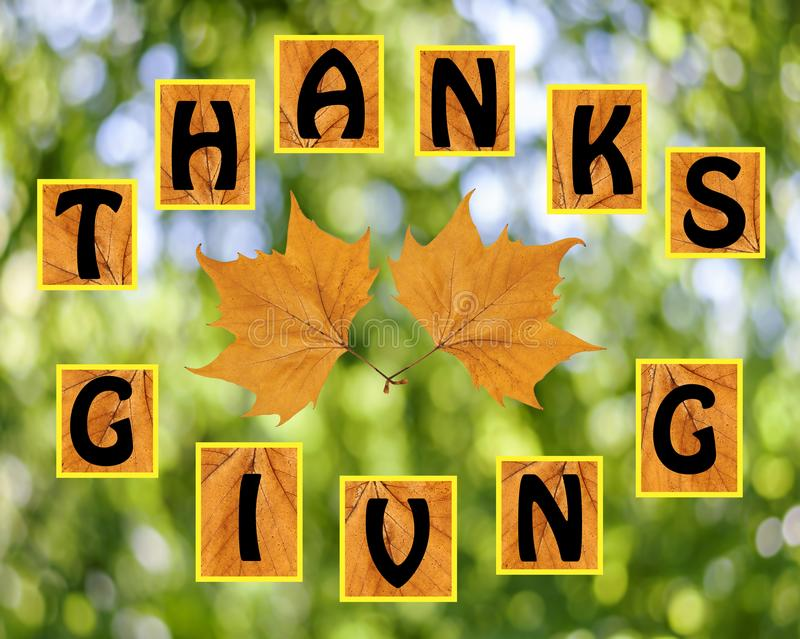 Thanks giving on blurr background. Close royalty free stock images