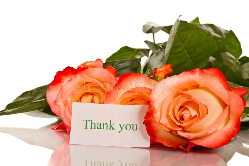 Thanks to the blooming roses. On a white background royalty free stock photography