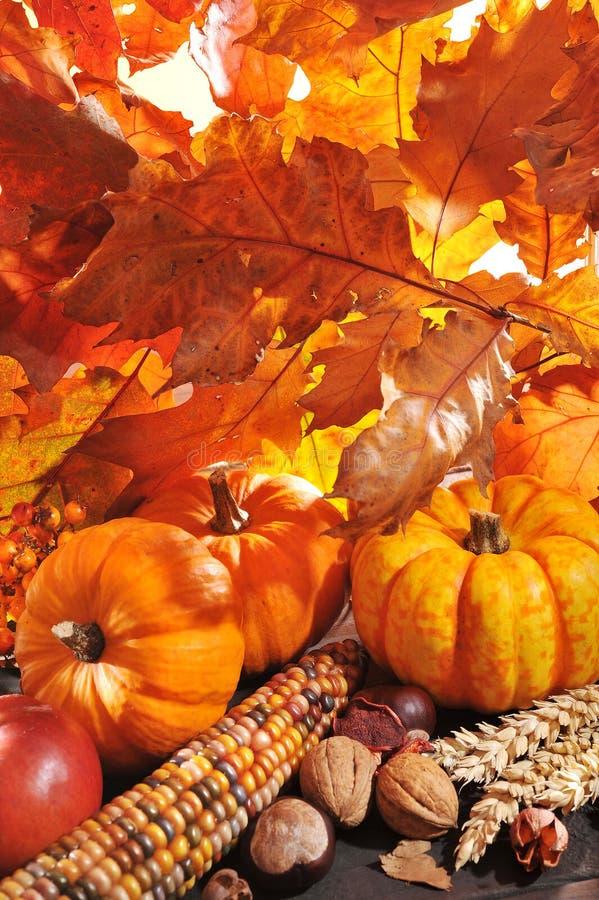 Download Thanksgiving immagine stock. Immagine di conker, copia - 56880683