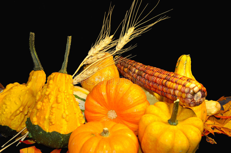 Download Thanksgiving 6 stock photo. Image of indian, orange, small - 6625190