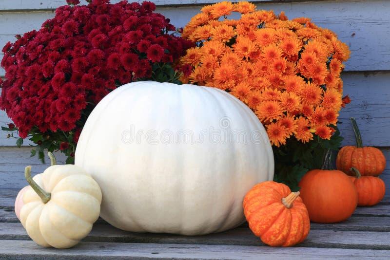 Thanksgiving, automne d'automne, symboles de récolte photographie stock libre de droits