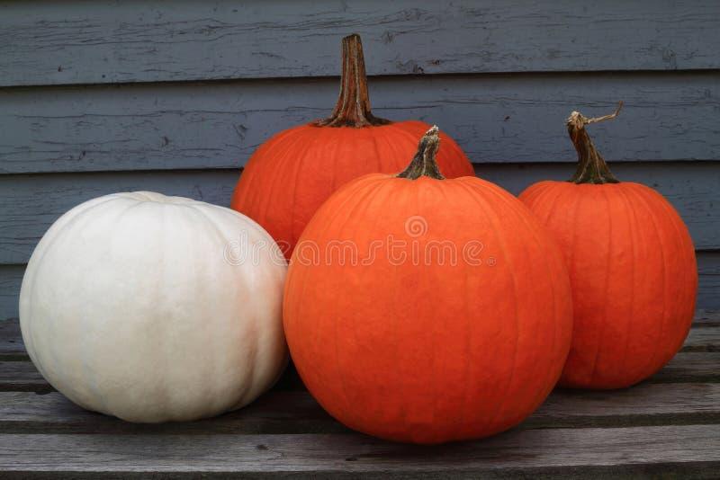 Thanksgiving, automne, fond d'automne images libres de droits