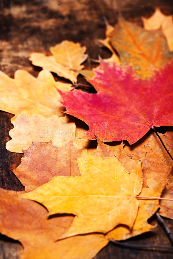 Thanksgiving Autumn Fall background with colorful leaves over r stock photos