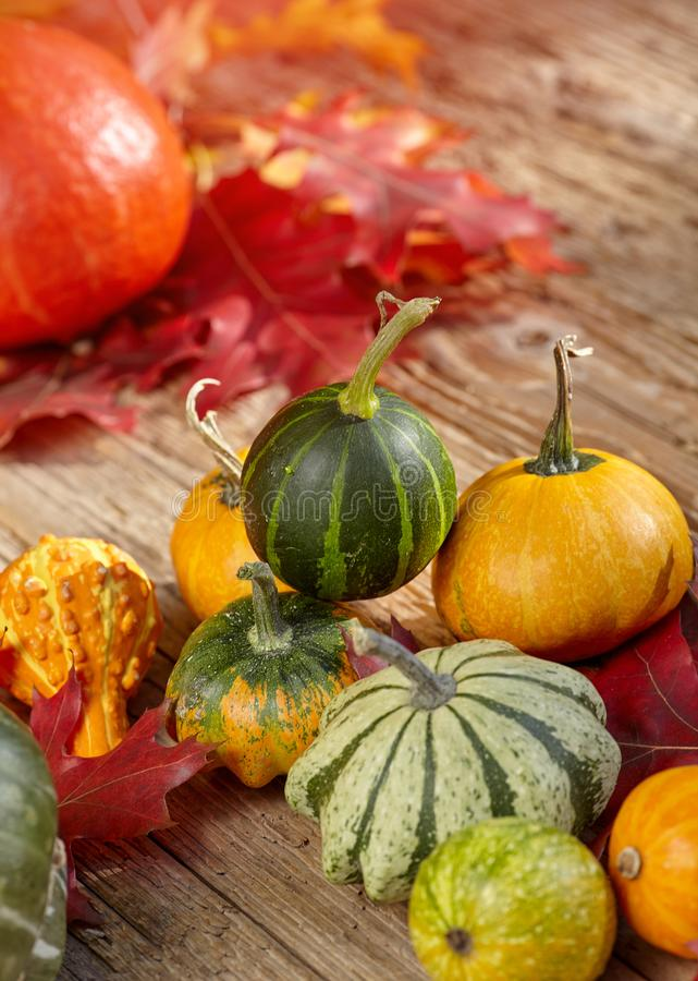 Thanksgiving Autumn Fall background met rood, bruin en geel l stock foto