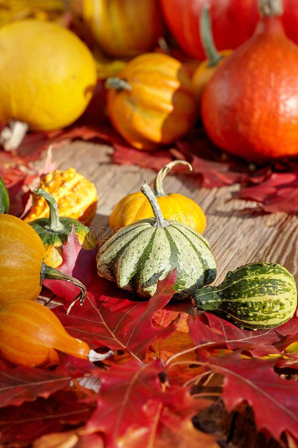 Thanksgiving Autumn Fall background met rood, bruin en geel l stock afbeeldingen