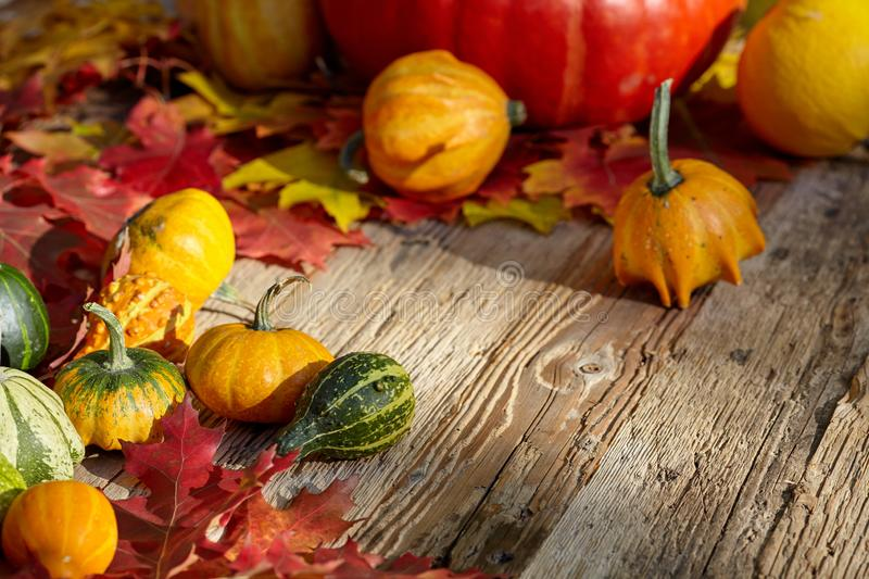Thanksgiving Autumn Fall background met rood, bruin en geel l stock foto's