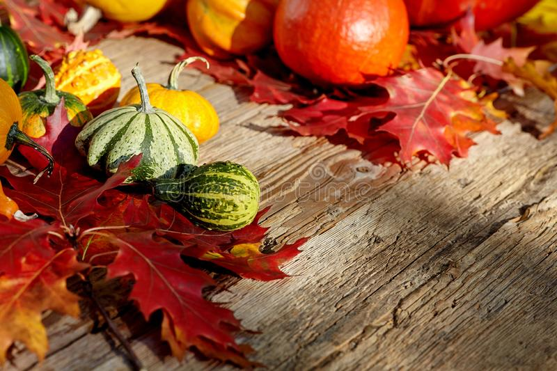 Thanksgiving Autumn Fall background met rood, bruin en geel l stock fotografie