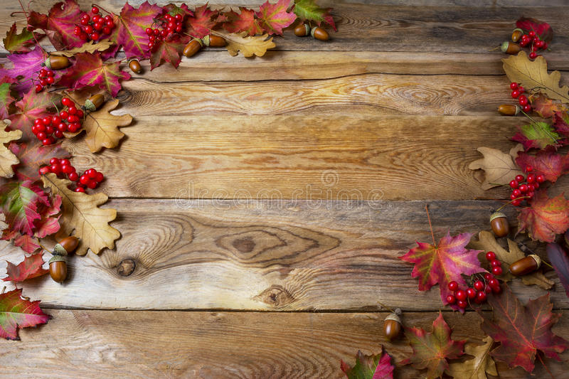 Thanksgiving background with berries, acorn and fall oak leaves royalty free stock photo