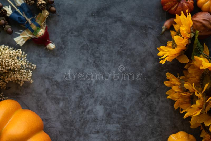 Thanksgiving background with pumpkins, flowers and scarecrow on a grey cement background. Copy space for your text royalty free stock photography