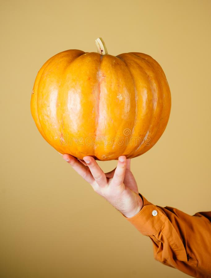 Thanksgiving day cooking. Happy Halloween. Pumpkin with hand  on orange background.  royalty free stock images
