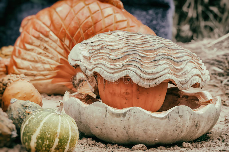 Thanksgiving Day and Halloween decoration. Carving from pumpkin, seashell with pearl. Autumn, fall background royalty free stock photo