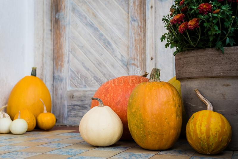 Thanksgiving decorated front door with various size and shape pumpkins and chrysanthemum. Front Porch decorated for Thanksgiving. Thanksgiving decorated front royalty free stock photos