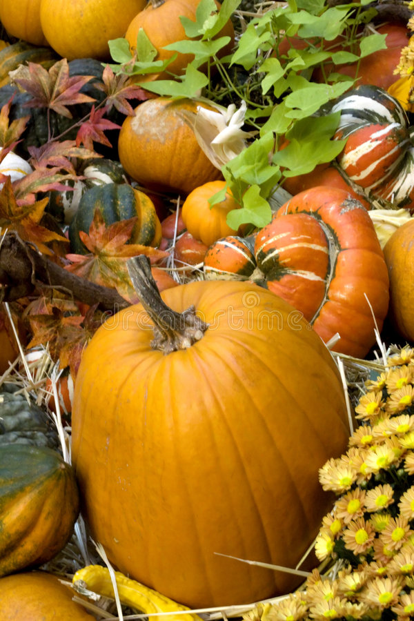 Thanksgiving and fall decor stock photography