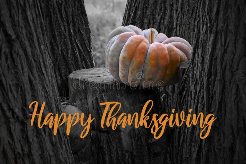 Happy Thanksgiving pumpkin greeting card illustration royalty free stock photography