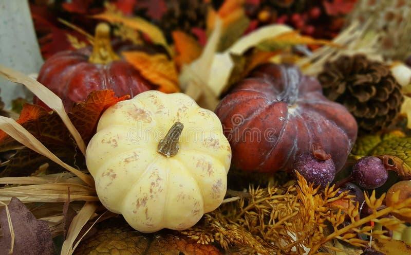 Thanksgiving & Halloween decoration with three pumpkins. Fall, Autumn. royalty free stock photos