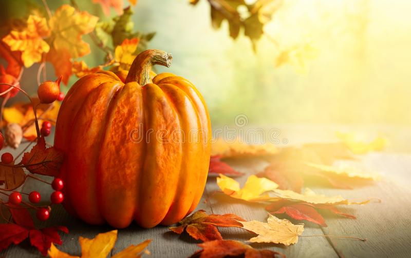 Thanksgiving orange pumpkins, autumn leaves and berries on wooden table. royalty free stock images