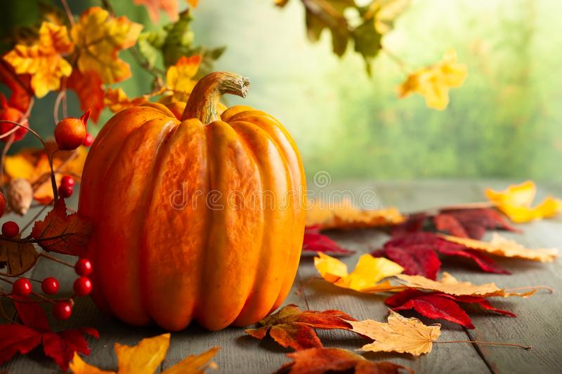 Thanksgiving orange pumpkins, autumn leaves and berries on wooden table.  Autumn background banner with falling leaves royalty free stock photo