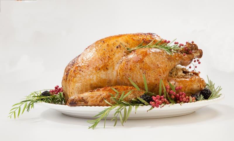 Thanksgiving Turkey on White royalty free stock photos