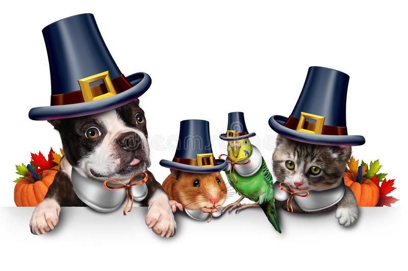 Thanksgiving Pet Celebration. As a blank sign with a fun cat happy dog cute hamster and budgie each wearing a pilgrim hat head garment as an autumn seasonal royalty free illustration