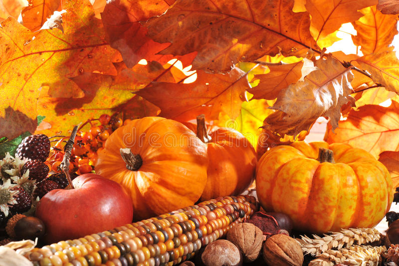Thanksgiving royalty free stock photos