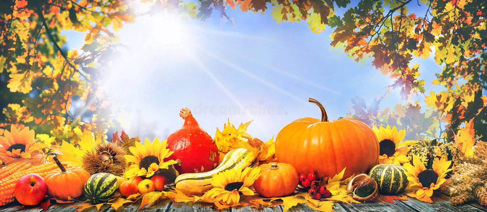 Thanksgiving pumpkins and falling leaves on rustic wooden plank stock photo