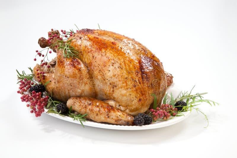 Thanksgiving Turkey on White stock images